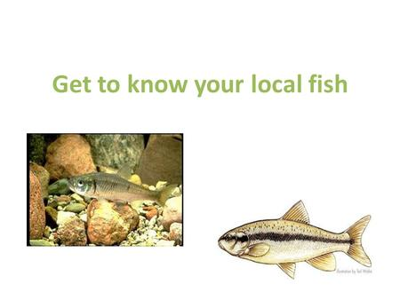 Get to know your local fish. Stonecat (catfish) Mottled sculpin Bluegill Small mouth bass Pumpkinseed Brook trout.