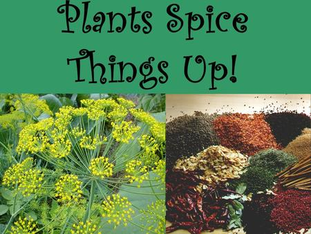 Plants Spice Things Up!. What is a spice? A vegetable production, fragrant or aromatic to the smell and pungent to the taste. Used in cookery; derived.