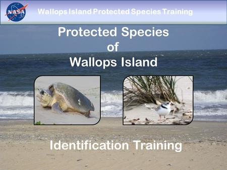 Wallops Island Protected Species Training Protected Species of Wallops Island Identification Training.