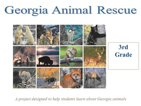 3rd Grade A project designed to help students learn about Georgia animals.
