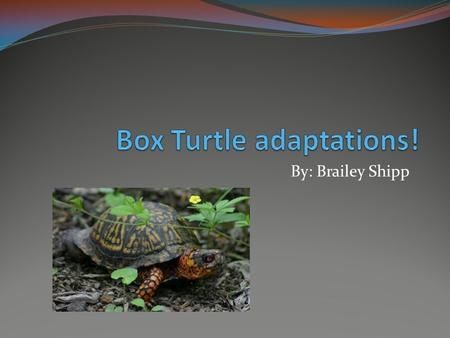 By: Brailey Shipp. Turtle Shell The Box Turtle is Just as Normal as any other Turtle The only thing different from some turtles is its shell.