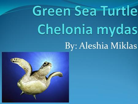 By: Aleshia Miklas. Summary The green sea turtle is one of the largest and most widespread of all the marine turtles. These marine animals inhabit tropical.