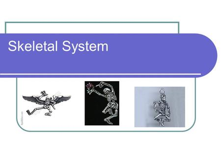 Skeletal System. Types of Skeletons There are 2 types of skeleton. Endoskeleton Exoskeleton Example: Humans Endoskeleton basically means that the skeleton.
