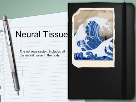Neural Tissue The nervous system includes all the neural tissue in the body.