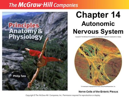 Copyright © The McGraw-Hill Companies, Inc. Permission required for reproduction or display. Chapter 14 Autonomic Nervous System Nerve Cells of the Enteric.