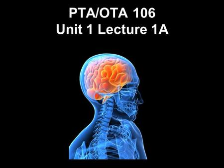 PTA/OTA 106 Unit 1 Lecture 1A. PTA 106 Regional Anatomy and Physiology Regional Anatomy- Focuses on the anatomical organization of specific areas of the.