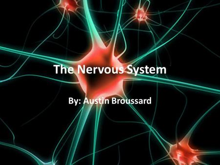 The Nervous System By: Austin Broussard. Main Systems Central Nervous System (CNS)- is made up of the brain and the spinal cord, it completes the function.