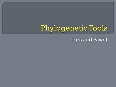 Tara and Pawel.  Download MEGA (Molecular Evolutionary Genetics Analysis) 