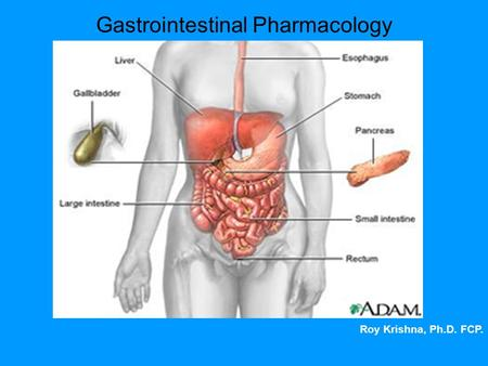 Gastrointestinal Pharmacology Roy Krishna, Ph.D. FCP.