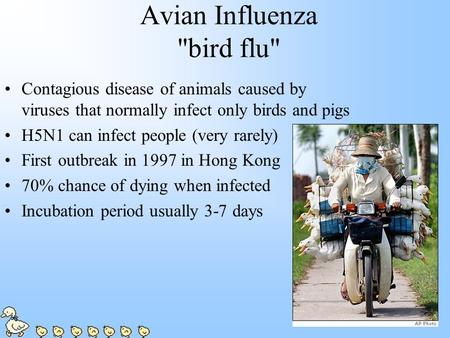 Avian Influenza bird flu Contagious disease of animals caused by viruses that normally infect only birds and pigs H5N1 can infect people (very rarely)