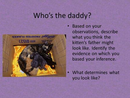 Who's the daddy? Based on your observations, describe what you think the kitten's father might look like. Identify the evidence on which you based your.