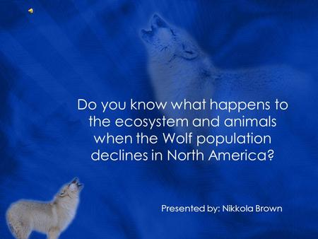 Do you know what happens to the ecosystem and animals when the Wolf population declines in North America? Presented by: Nikkola Brown.