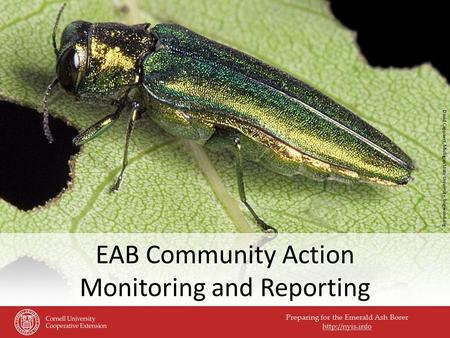 Preparing for the Emerald Ash Borer  EAB Community Action Monitoring and Reporting David Cappaert, Michigan State University, bugwood.org.