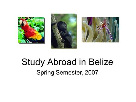 Study Abroad in Belize Spring Semester, 2007. Why Belize? Tropical paradise –Tropical forests Abundant wildlife –Pristine rivers.
