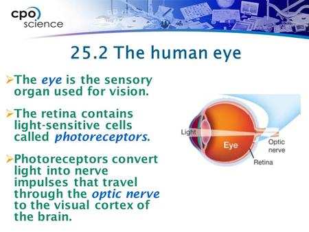 25.2 The human eye The eye is the sensory organ used for vision.