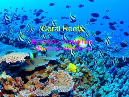 Coral Reefs By Melissa Cantwell and MaryClare Woodforde.