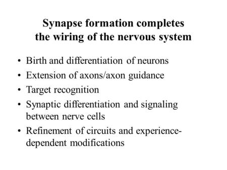 Synapse formation completes the wiring of the nervous system Birth and differentiation of neurons Extension of axons/axon guidance Target recognition Synaptic.