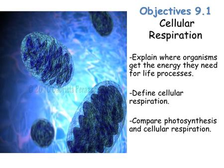 Lesson Overview Lesson Overview Cellular Respiration: An Overview Objectives 9.1 Cellular Respiration -Explain where organisms get the energy they need.