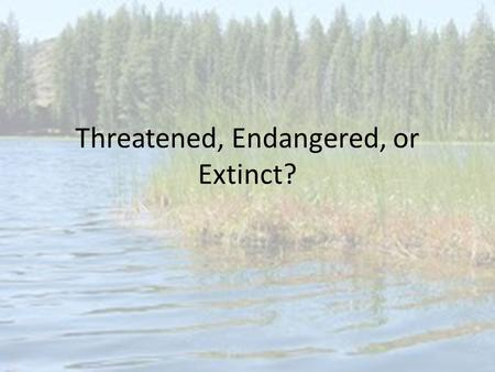 Threatened, Endangered, or Extinct?. Why do we have species declining in numbers? Mostly human interaction with the species: – Overhunting – Climate change.