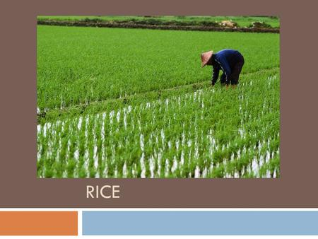 RICE. BROWN RICE  Whole grain rice, nothing is removed, has the most nutrients.