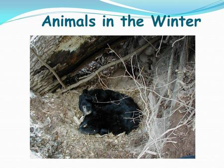 Animals in the Winter What do animals do during the winter?