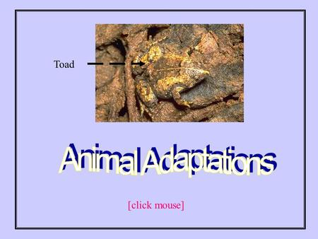 Toad [click mouse]. How are animals able to survive in the wild? Animals have certain adaptations that help them to survive. [click mouse]