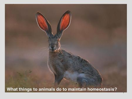 1 What things to animals do to maintain homeostasis?