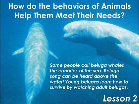 How do the behaviors of Animals Help Them Meet Their Needs?