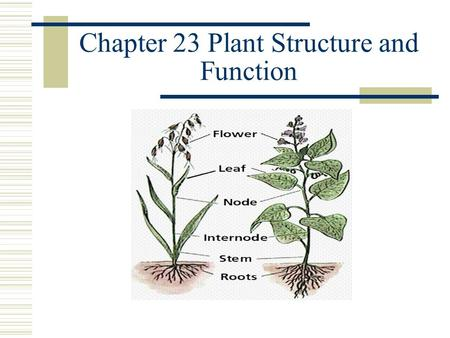 Chapter 23 Plant Structure and Function Plant Tissue Vascular Plants have four basic types of tissue 1.Vascular tissue 2.Ground tissue 3.Epidermis 4.Meristematic.