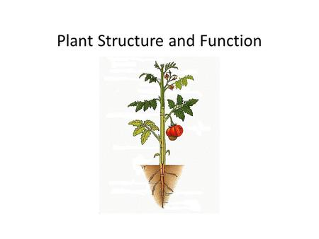 Plant Structure and Function. Plant Cells Cell TypeExampleFunctions Parenchyma Storage Photosynthesis Gas Exchange Protection Tissue Repair and Replacement.