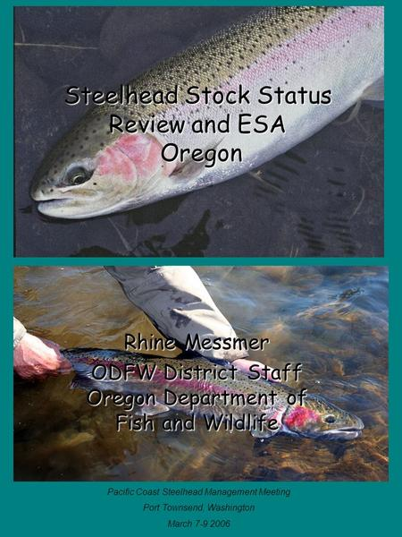 Steelhead Stock Status Review and ESA Oregon Rhine Messmer ODFW District Staff Oregon Department of Fish and Wildlife Pacific Coast Steelhead Management.