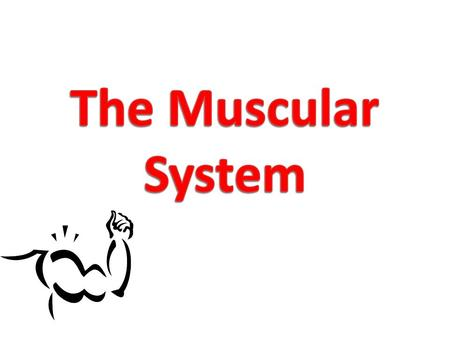 Types of Muscle Tissue There are three different types of muscle tissue – Skeletal – Smooth – Cardiac.