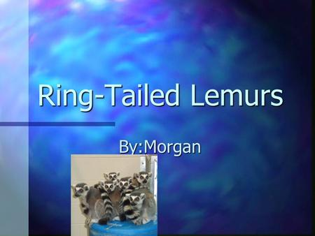 Ring-Tailed Lemurs By:Morgan.