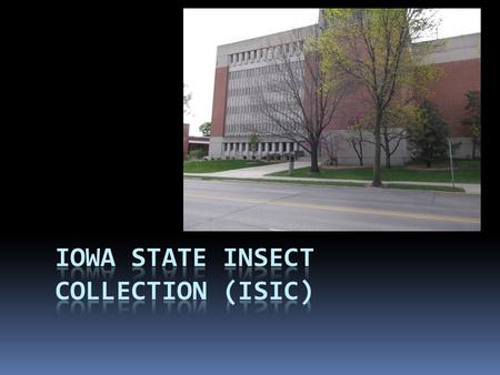 History  Collection dates back to the 1880s, when Herbert Osborn was on the faculty  Collection was originally combined with the ISU vertebrate collection.