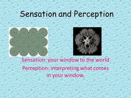 Sensation and Perception Sensation: your window to the world Perception: interpreting what comes in your window.