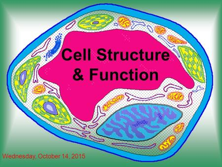 Cell Structure & Function Wednesday, October 14, 2015.