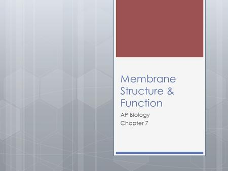 Membrane Structure & Function AP Biology Chapter 7.