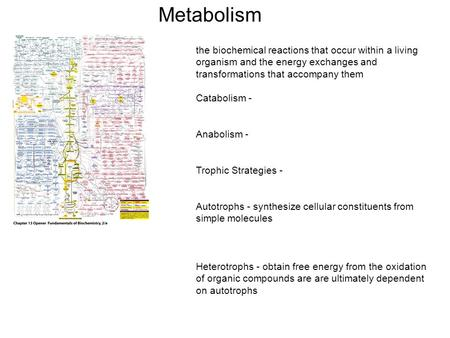 Metabolism the biochemical reactions that occur within a living organism and the energy exchanges and transformations that accompany them Catabolism -