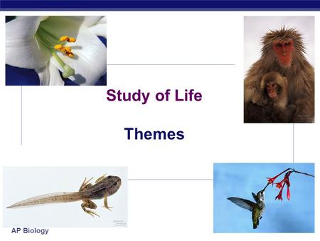 AP Biology Study of Life Themes AP Biology Themes  Science as a process of inquiry  questioning & investigation  Evolution  Energy transfer  Continuity.