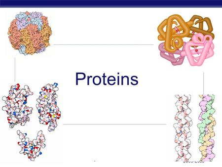 2005-2006 AP Biology Proteins. AP Biology Proteins  Most structurally & functionally diverse group of biomolecules  Function:  involved in almost everything.