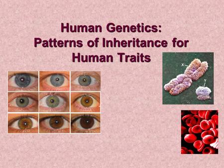 Human Genetics: Patterns of Inheritance for Human Traits.