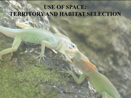 USE OF SPACE: TERRITORY AND HABITAT SELECTION. Some basics of Natural Selection Evolution – pattern of change Natural Selection – process by which evolution.