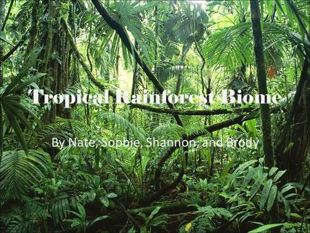 Tropical Rainforest Biome By Nate, Sophie, Shannon, and Brody.