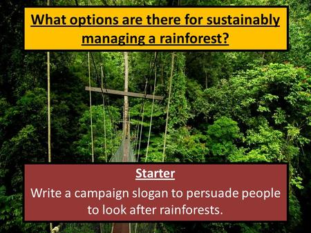What options are there for sustainably managing a rainforest? Starter Write a campaign slogan to persuade people to look after rainforests.