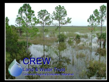 CREW Land & Water Trust Corkscrew Regional Ecosystem Watershed Photo by Brenda Brooks.