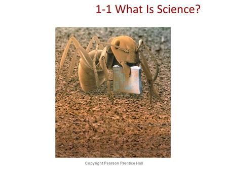 1-1 What Is Science? Copyright Pearson Prentice Hall.