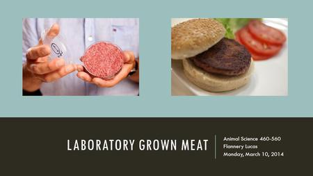 LABORATORY GROWN MEAT Animal Science 460-560 Flannery Lucas Monday, March 10, 2014.