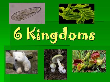 6 Kingdoms The Kingdom of Eubacteria  Single-Celled  Prokaryotic  Producer/Consumer  No Organelles  Some are helpful by producing vitamins and foods.
