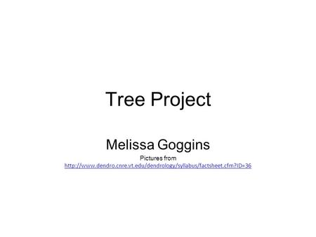 Tree Project Melissa Goggins Pictures from
