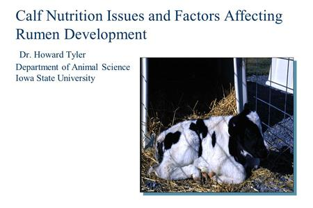 Calf Nutrition Issues and Factors Affecting Rumen Development Dr